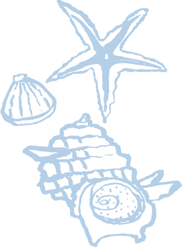 背景画像_貝殻2